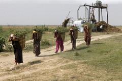 Sustainable Livelihoods in Nepal