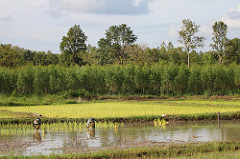 Watershed and Ecosystem services in Kho Kaen Pilot Province